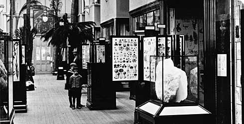 The Botany Gallery in 1911.