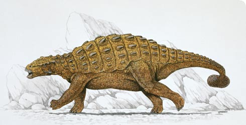 Pinacosaurus illustration