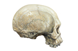 Robust Aborigine