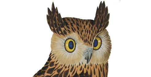 Tawny fish owl illustration
