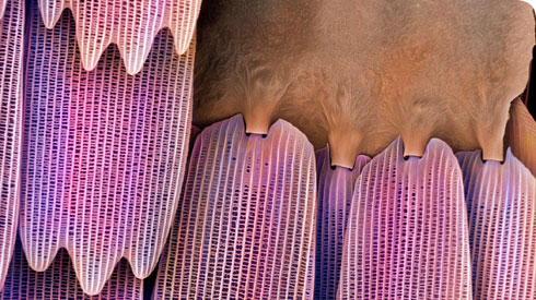 Close up of a section of butterfly wing, imaged using the LEO 1455VP scanning electron microscope