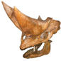 Arsinotherium skull from Egypt