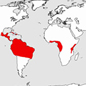 Native distributions of the three families of Scutigeromorpha (introduced species are not mapped, e.