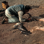 Museum palaeontologists excavating dinosaur fossils in Niger, northwest Africa