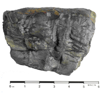 Incomplete conulariid preserved in three dimensions from Ordovician of Ciudad Real.