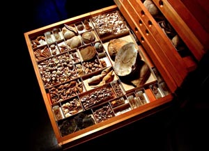 Fossil Molluscs in a Natural History Collection