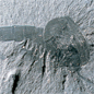 The arthropod fossil specimen Waptia fieldensis