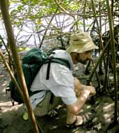 David Reid collecting littorinids in mangroves in Costa Rica
