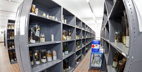 Spirit collection shelving at Tring.