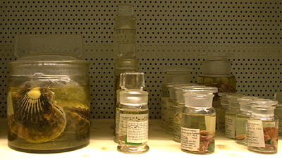 spirit preserved specimens