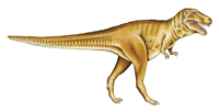 Illustration of T.rex. the gigantic predator that lived 67-65 million years ago.