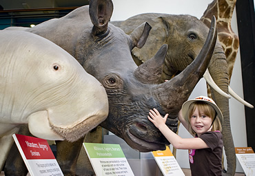 Madeleine May, aged 6, in the Mammals gallery was the 25 millionth visitor to Museum