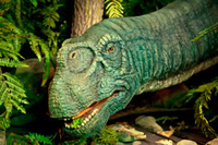 Camarasaurus in the vegetation