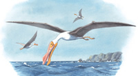 100-million-year-old pterosaur Anhanguera