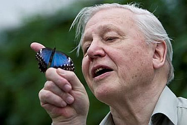 Sir David Attenborough announces the Butterfly Survival Zones at the Museum's Amazing Butterflies ex