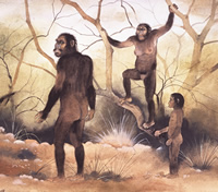 Illustrated scene with ancient human relative Australopithecus afarensis