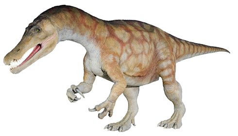 Could the first Australian spinosaur dinosaur be a Baryonyx?