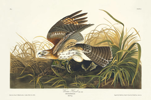 The Birds of America is the Natural History Museum's first eBook