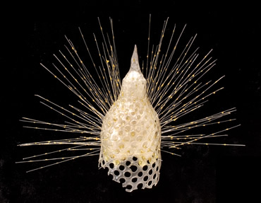 This Blaschka glass model is a species of radiolarian (a marine invertebrate).