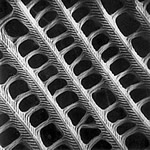 Butterfly wing under SEM (Scanning Electron Microscope)