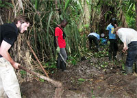 Museum scientists and locals digging for caecilians (pronounced si'silians) in Cameroon.