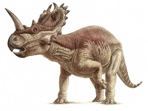 Illustration of Centrosaurus that lived in the late Cretaceous.
