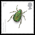 Noble chafer