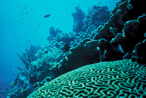 coral provide vital data on climate change