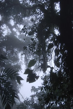Cloud forest of La Amistad in Costa Rica. It is the biggest forest reserve in C America © A Monro