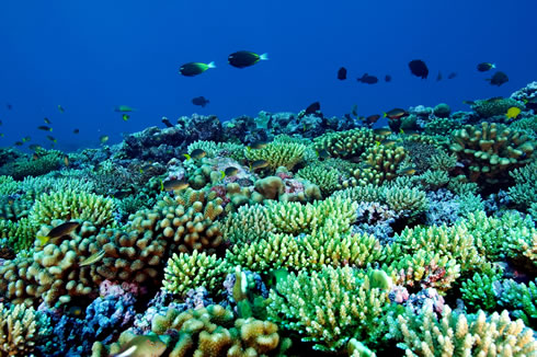 Coral reefs, such as this one in the South Pacific, provide ecosystem services worth up to £104 mill