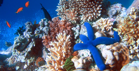 Some of the biodiversity of the Great Barrier Reef