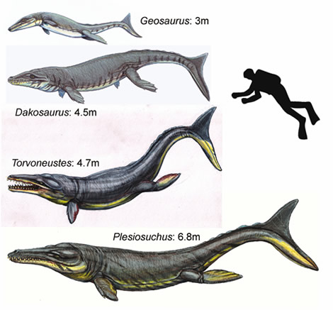 These four closely related crocodylians lived in western Europe about 152 million years ago. They al