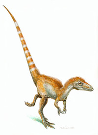 Dinosaur Sinosauropteryx may have had an orange coloured crest