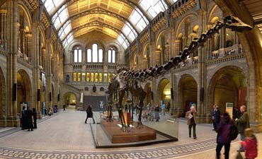 Did sauropods, like Diplodocus in the Museum's Hintze Hall, hold their heads up or more horizontal?