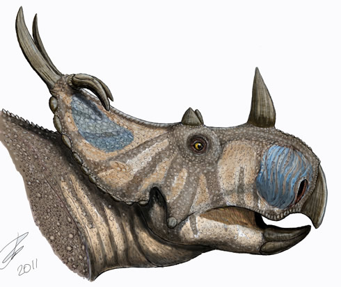 Illustration of new horned dinosaur Spinops identified from skull bone fossils overlooked in the NHM