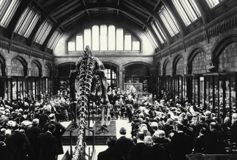 The unveiling of Dippy, the 26m cast of a Diplodocus, at a ceremony at the Museum on 12 May 1905