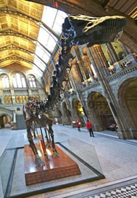 Dippy in the Museum's Central Hall