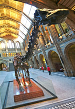 The Diplodocus cast has welcomed visitors to the Museum's Central Hall for more than 30 years