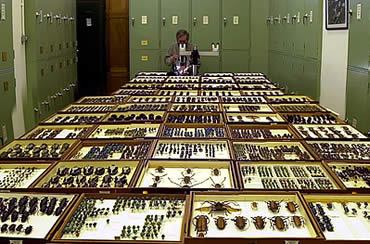 Some of the 170,000 drawers in the Museum's Entomology Department that hold 28 million insects.