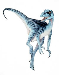 The oldest dinosaur, Nyasasaurus parringtoni, may have looked like this early dinosaur, Eoraptor