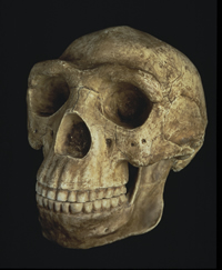 Reconstruction of a female Homo erectus cranium from China