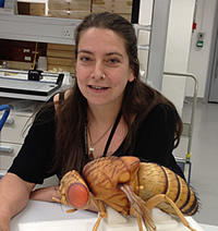 Erica McAlister with a model Drosophila, one of the flies attracted to vinegar.