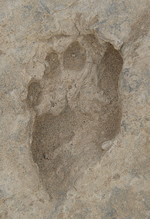 1.5-million-year-old human footprint found at Ileret in Kenya