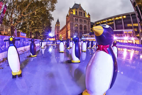 Ice Rink with penguin stabilisers