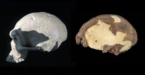 Iwo Eleru cráneo de Nigeria (a la derecha) se remonta a hace 13.000 años, pero muestra las características más antiguo