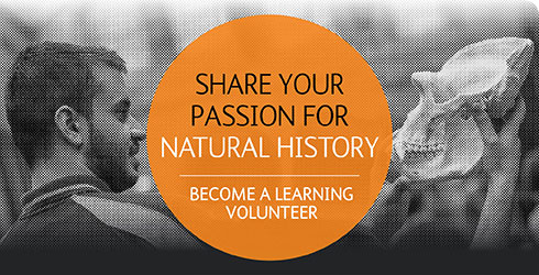 Learning Volunteers Programme
