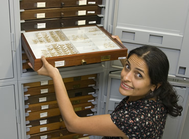 Museum butterfly curator Blanca Huertas placing some of the 8.7 million butterfly and moth specimens