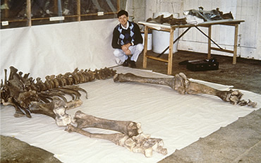 Adrian Lister with woolly mammoth bones uncovered in Shropshire in 1986