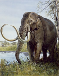 The world's smallest mammoth may have looked like a dwarf version of this mammoth.