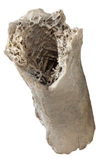 First piece of moa bone, found between 1831 and 1836.